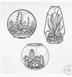 succulent, art, idea, illustration – photo … - All About Succulents Drawing, Drawing Flowers, Painting Flowers, Succulents Art, Succulent Tattoo, Cactus Tattoo, Plant Tattoo, Beautiful Sketches, Art Drawings Beautiful