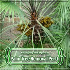 If you need palm tree removal, Perth expert suggest checking out this website- http://www.martelletticontracting.com.au/palm-tree-removal-perth