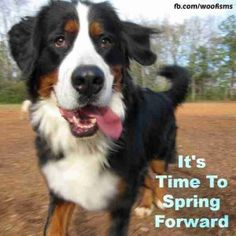 Don't forget tonight is the night to spring forward.  Say goodbye to the extra hour of sleep and hello to the extra hour of daylight. Woof! ...