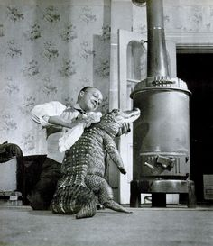 Gatie the alligator, 1948. 1 - After a bath, Gatie the Chicago Alligator braces himself on his hind legs as his master rubs his scaly skin dry beside the living room stove.