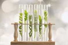 Ideas for test tubes as decoration, vases and wedding favors - decor store 2018