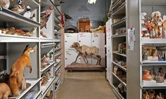 Education Collections : Denver Museum of Nature & Science