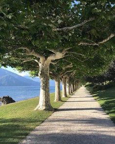 The Giardini di Villa Melzi on the beautiful Lake Como.🌳🌳🌳 Greetings from Bellagio, greetings from Italy 🇮🇹 💚🌱 . Picturesque botanical garden with lakeside paths in Italy 🌿 The 'I Giardini di Villa Melzi'. Beautiful Roads, Beautiful Landscapes, Beautiful World, Beautiful Places, Plane Tree, Nature Aesthetic, Walking In Nature, Nature Pictures, Belle Photo