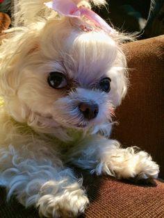 Chocho. Always cute ^^