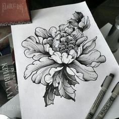 Сhrysanthemum sketch by Family Ink #Сhrysanthemum #Сhrysanthemumtattoo #tattooart #tattoosketch #familyink