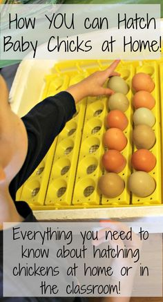 How to incubate chicken eggs with kids!  Everything you need to know about hatching chicks at home or in the classroom! www.HowWeeLearn.com