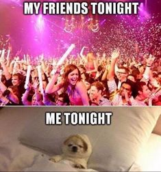 Are you an introvert or an extrovert? Go through these funny introvert vs extrovert memes and you will have the answer (and a good laugh). New Year Meme, Funny New Year, Quotes About New Year, Happy New Year, Introvert Love, Introvert Quotes, Introvert Problems, Infj, Introvert Funny