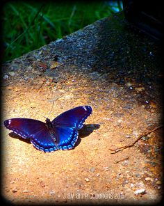 I captured this butterfly in a photo, the other day, and listed the photo on etsy within hours it was in a treasury & fav'd by 8 people. Woot! That was the fastest ever for me! I sell under the name aktie9.