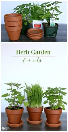 Herb Garden for Cats Bring the outside in for your indoor cat Herbs that are healthy and safe for your cat Hydroponic Gardening, Hydroponics, Container Gardening, Organic Gardening, Gardening Tips, Indoor Gardening, Vegetable Gardening, Outdoor Gardens, Cat Safe Plants