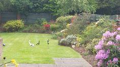 Mixed shrub border tidy up