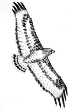 Tribal hawk flying by coyotehills on deviantart aigles - Dessiner un faucon ...