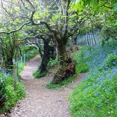 The walk to Bluebell Woods, and onto Fermain Bay