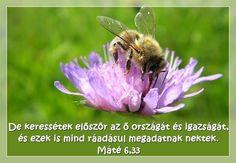 Mt 6,33 Isten országa Jesus Christus, Bee, Animals, Bible Verses, Postcards, Honey Bees, Animales, Animaux, Bees