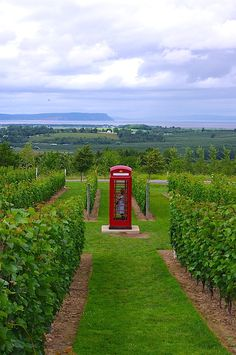 Luckett - vineyard red phone booth, Gaspereau Valley, Nova Scotia