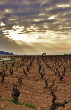 The Penedès Vinery. The influence of the sun and the Mediterranean sea make the Penedès a privileged territory for winemaking.