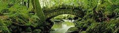 Kilfane Glen and Waterfalls, County Kilkenny, Ireland