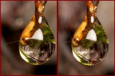 Stereograms!  3-D rain drop by Lord V, via Flickr