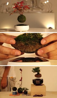 Japanese designers at The Hoshinchu Team, have created a bonsai named 'Air Bonsai', that appears to magically float above its base.