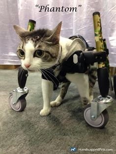 Wheelchair For Cats Zero Gravity Rocking Chair 36 Best In Wheelchairs Images 2019 Dog Cat Walkin Wheels Dogs Of All Sizes