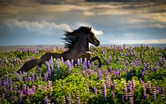 Gallop through the Lupine Photo by Tina Thuell — National Geographic Your Shot