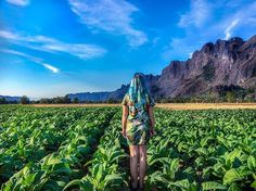 Konglor Laos  . . Outside our bungalow in the middle of the tobacco fields  #dreamytravelstory  #konglor #laos #explorelaos #travellingthroughtheworld #visitlaos #travelersnotebook #konglorcave #tobacco #backpackinglaos #backpacking #nature #lpfanphoto #asia #beautifulseasia #seasia #southeastasia #culturetrip #mountain #travelphotography #TLAsia #landscape #asia_vacations #mountains #laostagram #laostrip #landscapelovers #beautifuldestinations #travelblogger #thakhekloop