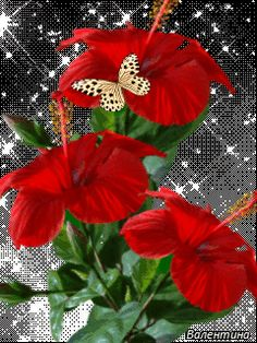 The perfect Red Flowers Butterfly Animated GIF for your conversation. Discover and Share the best GIFs on Tenor. Flowers Gif, Exotic Flowers, Red Flowers, Beautiful Gif, Beautiful Roses, Beautiful Butterflies, Amazing Flowers, Butterfly Gif, Morning Flowers