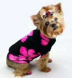 FuFu Fashions custom dog clothes and apparel