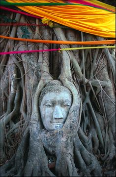 """""""Ayutthaya - Thailand"""" Buddha's head in roots  By: Miles Escow"""