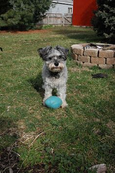 my pup dog