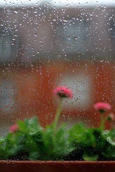 Sessizliğimizi koruyup, her zamanki gibi sabrı ve sükutu giyinip susma zamanı şimdi. . . Yağmur