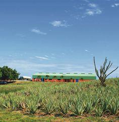 Aloe plantage op curacao, beste medicijn ter wereld.