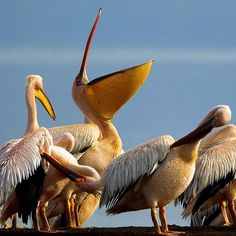 Lakes Elmentaita, Nakuru and Bogoria will now join Lamu Old Town and Lake Turkana National Parks on the world map. The three lakes are a network that constitutes the most significant natural habitat for in-situ conservation of threatened and endangered species such as the white pelicans.