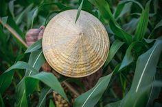 A ricefield close to Hoi An Hoi An, Vietnam Travel, Hanoi, Hue, Plant Leaves, My Photos, Wanderlust, Landscape, History