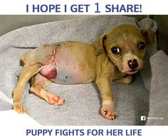 PLEASE DONATE TO HELP!!!! Baby Audrey is a tiny little peanut in a high-kill rural shelter where there are very little resources. You wont believe what the found wrong with this poor baby... ----► http://hendrickboards.com/s/save-audrey-scr