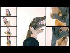 Singing Crocodile Puppet