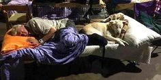 """So Many Pets Survived Hurricane Matthew Because Shelters Took in Their Whole Families SAVE A DOG..SAVE A VETERAN. BUY A PACK-BUDDY T-SHIRT OR HAT AND """"SAVE A DOG AND SAVE A VETERAN"""". PACK BUDDY RAISES FUNDS FOR TRAINING RESCUE/SHELTER DOGS TO SERVE AS SERVICE DOGS FOR CIVILIANS AND, FREE, FOR U.S. VETERANS. Anxiety, PTSD, Depression, Physical Disability www.Pack-buddy.com (Veteran Support) 1-760-321-1683"""