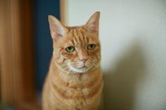 キャットインストラクターが教える、猫との信頼関係の築き方 Jul 11, 2014 / Topics Tags: column Photo:Kazuho Maruo Edit&Text:Madoka Hattori