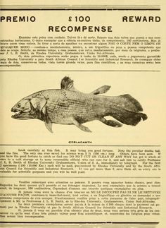 Resultado de imagem para origami coelacanth part 2 tutorial Leaflet Printing, Living Fossil, Natural Form Art, Archive Library, East Africa, East London, Natural History, Art Forms, Origami