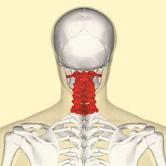 Гимнастика для шеи — четыре шага к гибкости и красоте! Всего четыре упражнения, которые кажутся банальными на первый взгляд, при регулярном выполнении помогут подтянуть кожу шеи, нормализовать сон и даже избавиться от болей в шейном отделе позвоночника и головных болей. Гимнастика для шеи поможет улучшить кровообращение, снять напряжение и в будущем избавит вас от трат […]