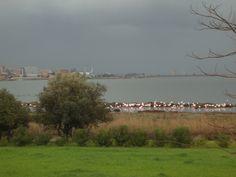 Pink flamingos in Santa Gilla lagoon  www.santaigia.it