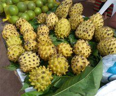 Atemóias deliciosas. É uma fruta híbrida obtida do cruzamento da chirimoia (Annona cherimola, Mill) com a fruta-pinha (Annona squamosa, L.), ambas pertencentes à família das anonáceas (a mesma da graviola). No Brasil há três variedades que estão bem aclimatadas. http://www.portalanaroca.com.br/quem-gosta-58/