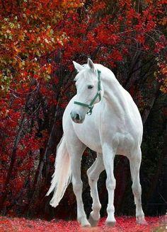 Snow-white grace on a background of golden autumn Белоснежная грация на фоне золотой осени - ТАТЬЯНА. Дмитриева - Google+