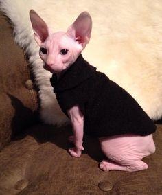 Sphynx Cat Kitten Clothes Jewel Tones Solid by SimplySphynx