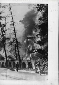 1959 Trees go up in flames on Laurel Canyon Blvd due to brush fire Press Photo