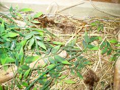 Jungle Bush kwarteltjes,  net uitgekomen.