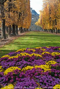 Vibrant flowers in full bloom during autumn in Tuileries Garden, Paris