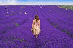 Fields of purple, Lavender fields, UK, England, Travel, adventure, Simply Simone