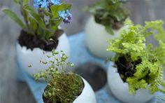 Egg shell plant pots