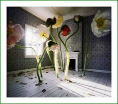 From Jan Dunning's Precarious Room Series