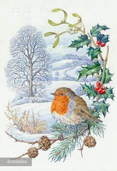 Christmas Bird, Christmas Scenes, Vintage Christmas, Bird Pictures, Pictures To Draw, Decoupage, Christmas Illustration, Mail Art, Christmas Pictures